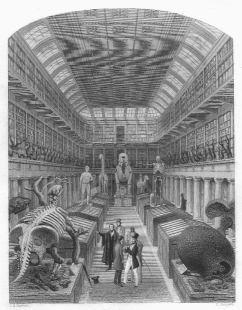 Hunterian Museum, London, 1853, Woodcut engraving by Sheperd and Radclyffe, from Dr. Nuno Carvalho de Sousa Private Collections, Lisbon, https://commons.wikimedia.org/wiki/File:1853_-_Hunterian_Museum.jpg